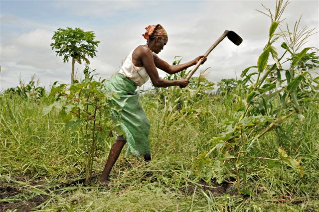 Agricoltura in sud Africa